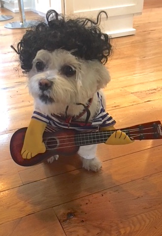 "Zoubi rocks out for Halloween. She doesn't always remember the lyrics and not having opposable thumbs makes it hard for a dog to be a lead player but she manages to hold up her end. The set list includes ""Walkin' the Dog"", ""Hound Dog"", ""The Boxer"" and ""Nashville Cats""."